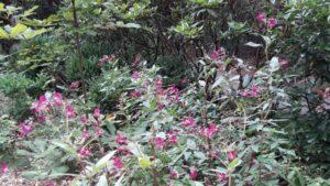 wilde bloeien